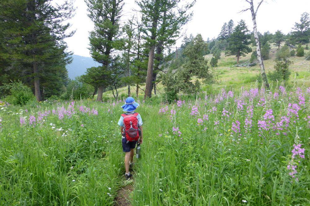 boy hiking in wildflowers