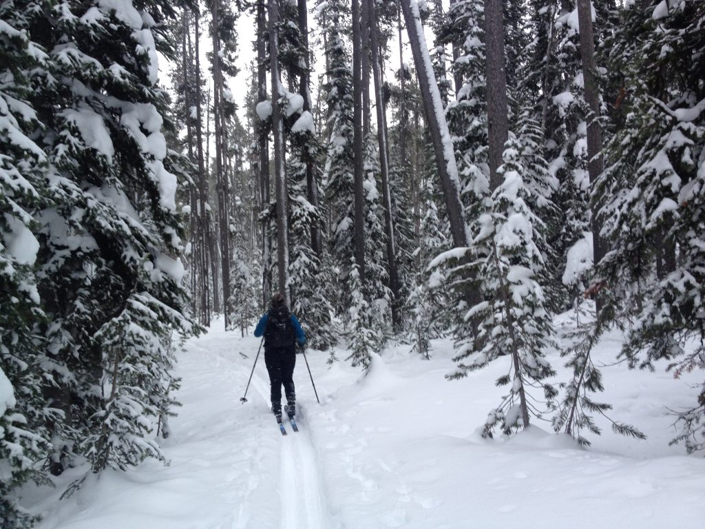 cross country skiing in yellowstone national park